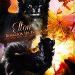 Världens bästa Elton – 8 år idag!